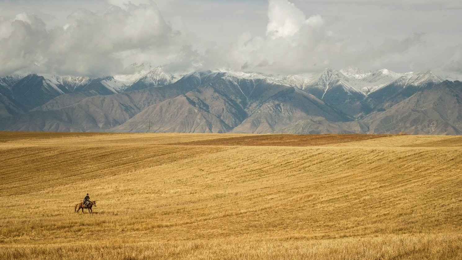 field of wheat and a cowboy