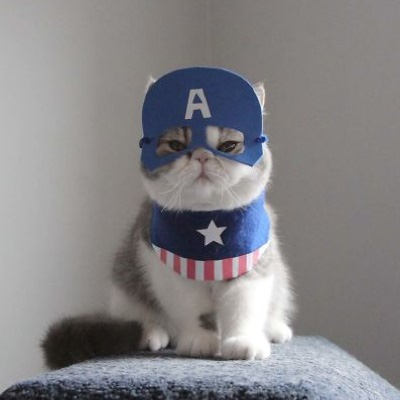 An Unhappy Captain America cat