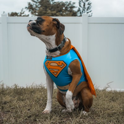 Superdog takes a quick breather