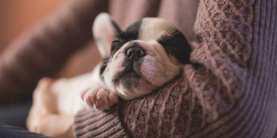 A cute sleepy puppy for Birthday Corner